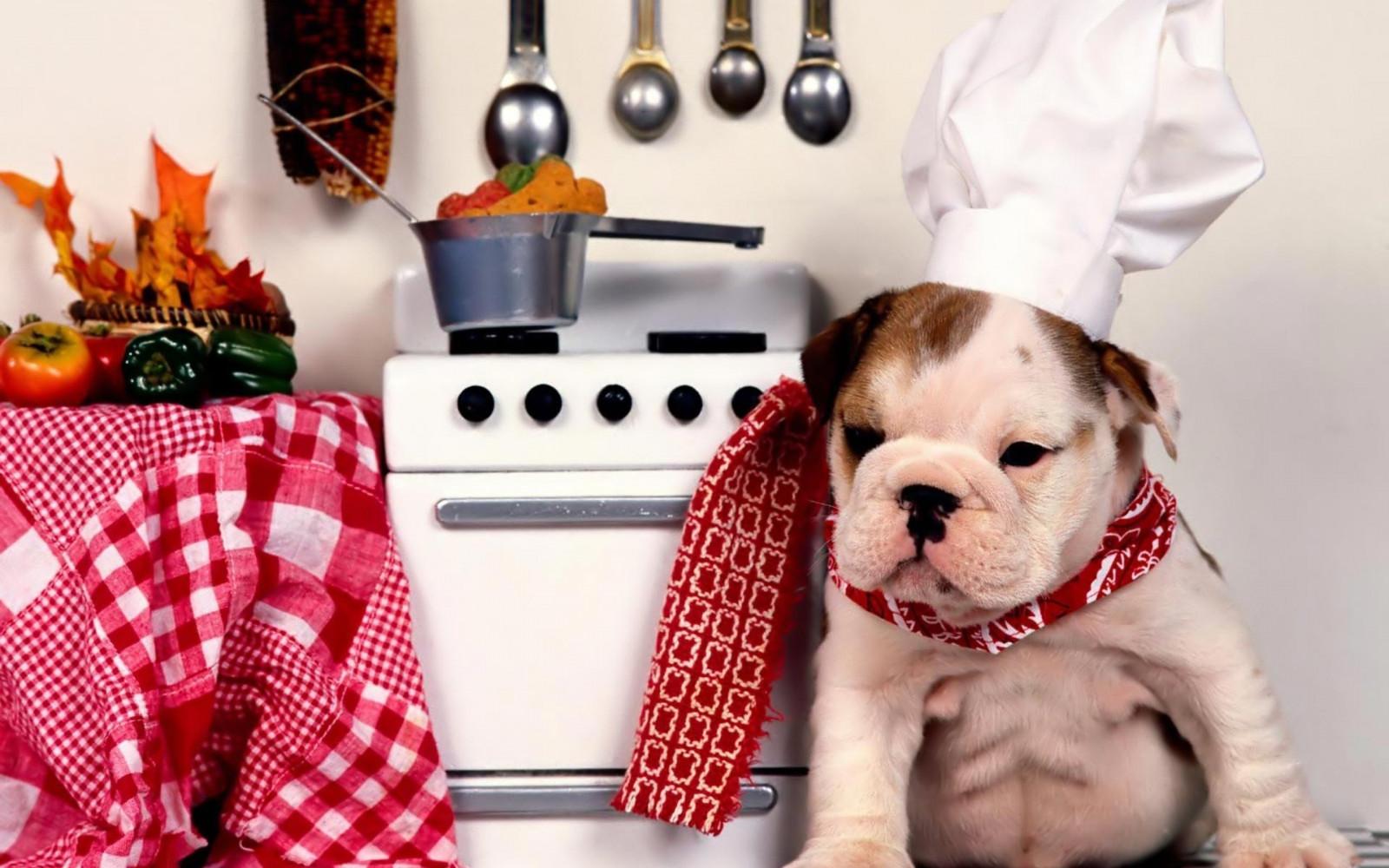Картинки любви, картинки кухни смешные