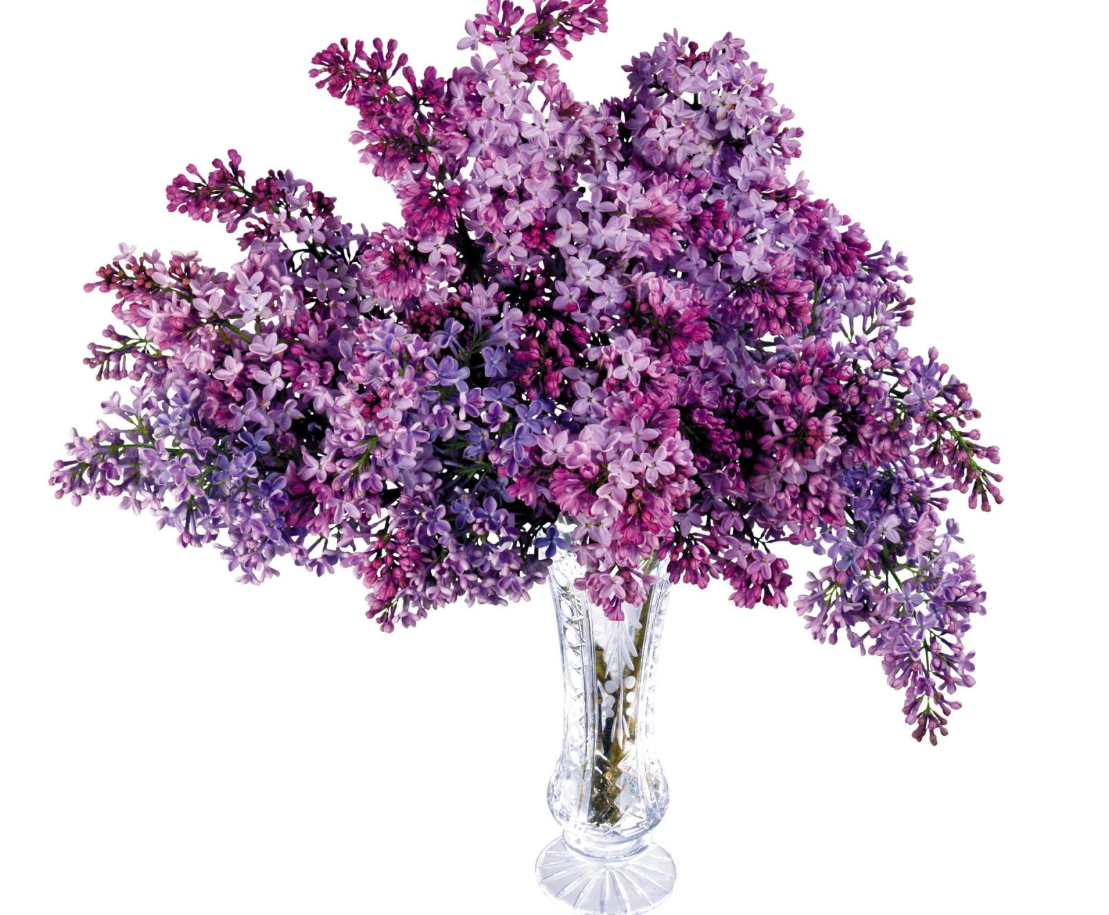 Hintergrundbilder : Flieder, Bündel, Vase, Frühling