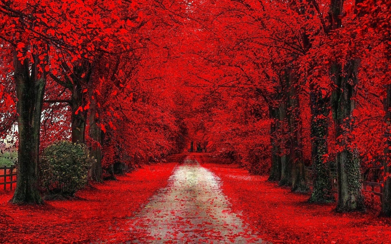 ต้นไม้ ป่า ตก ใบไม้ สีแดง สาขา น้ำค้างแข็ง ถนนสกปรก เส้นทาง ต้นไม้ ฤดูใบไม้ร่วง ใบไม้ ดอกไม้ ปลูก ฤดู ป่าไม้ โรงงานที่ดิน ไม้ยืนต้น