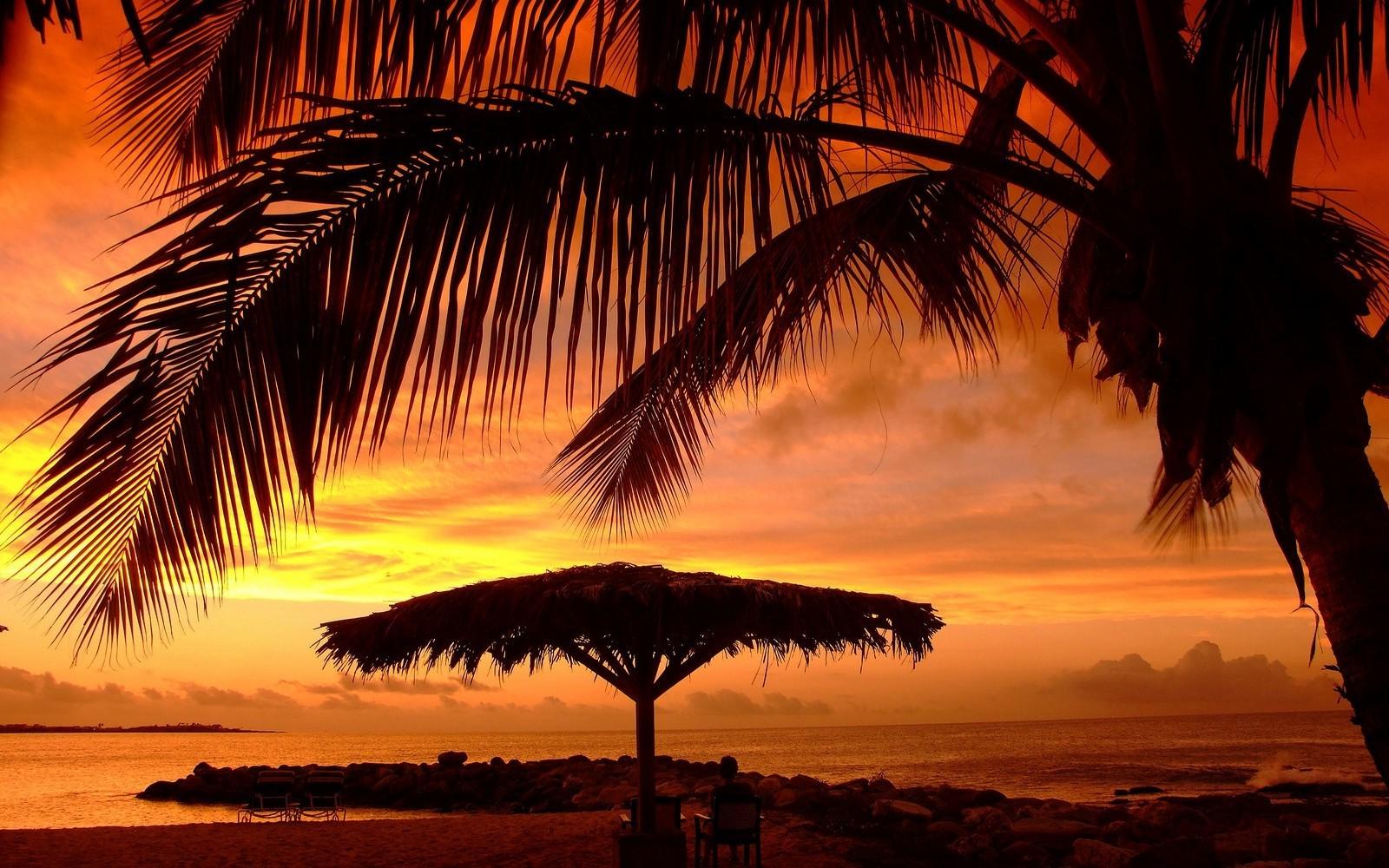 Sunlight Landscape Sunset Sea Nature Sky Clouds Beach Umbrella Sunrise Evening Morning Palm Trees Sun Horizon