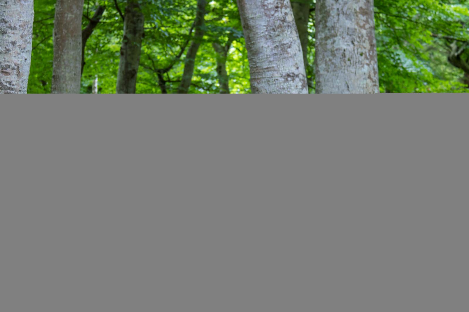 デスクトップ壁紙 森林 ブランチ 緑 カーテン インテリア