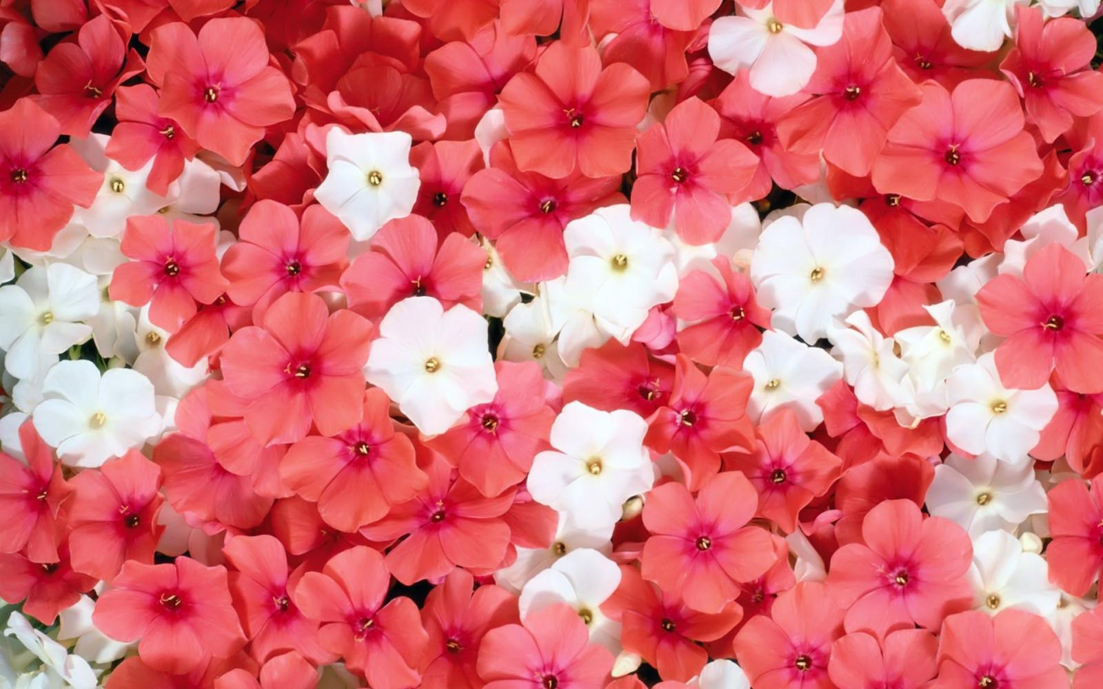 Fotos de flores de floriculturas 89