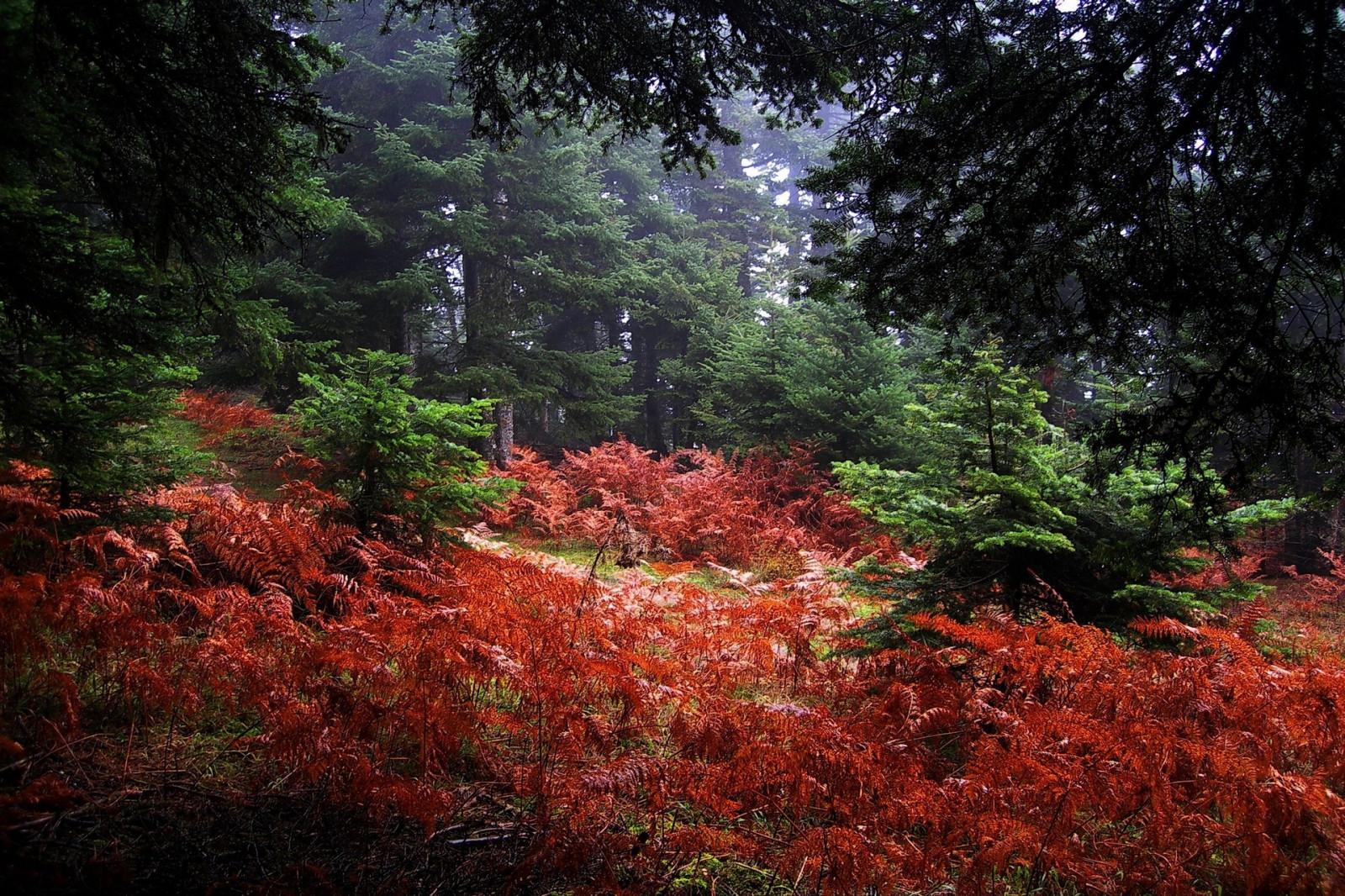 картинки с кустами в лесу телефоны, режимы