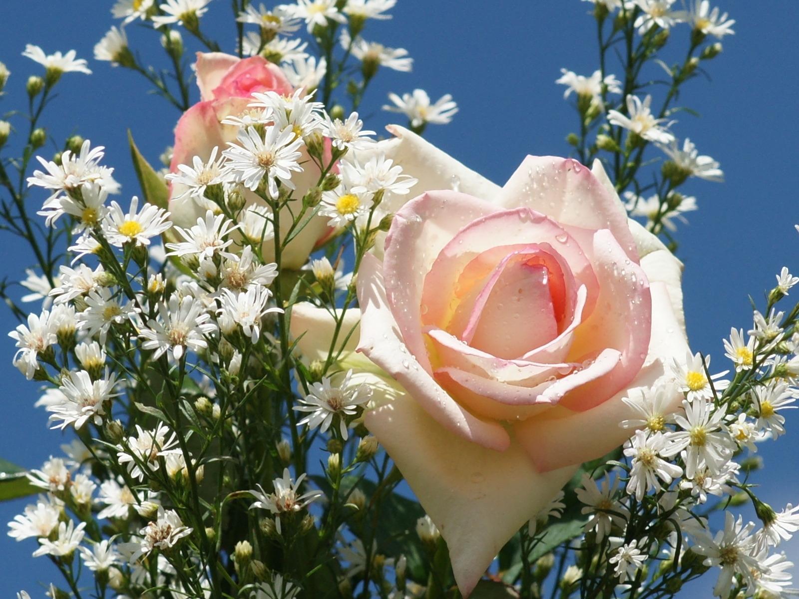 сути картинки розы с ромашками тот день был