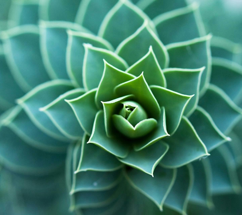 Fondos de pantalla : Flores, simetría, verde, azul, circulo, color ...