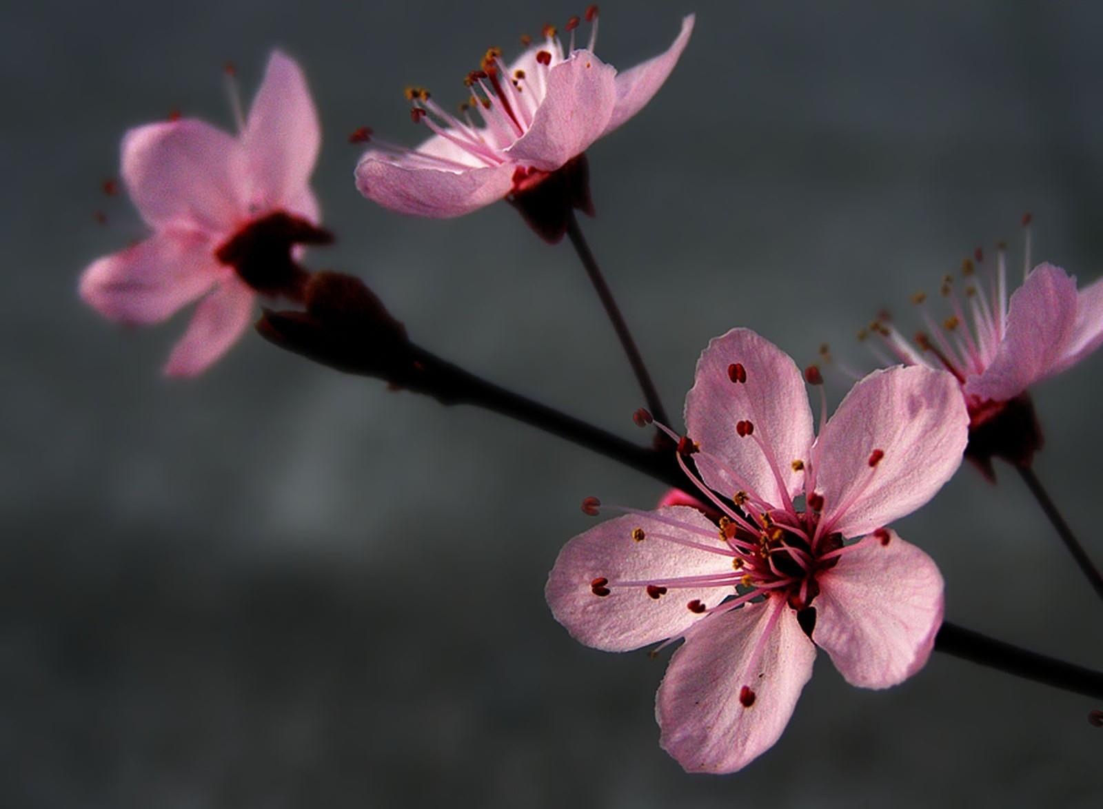 blossom branch spring pollen close up 723503