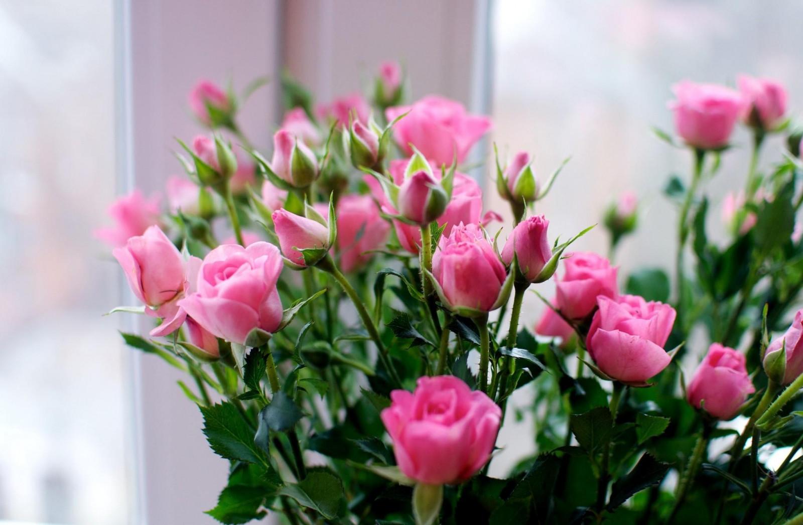 Дню медицины, открытка в цветы как называется