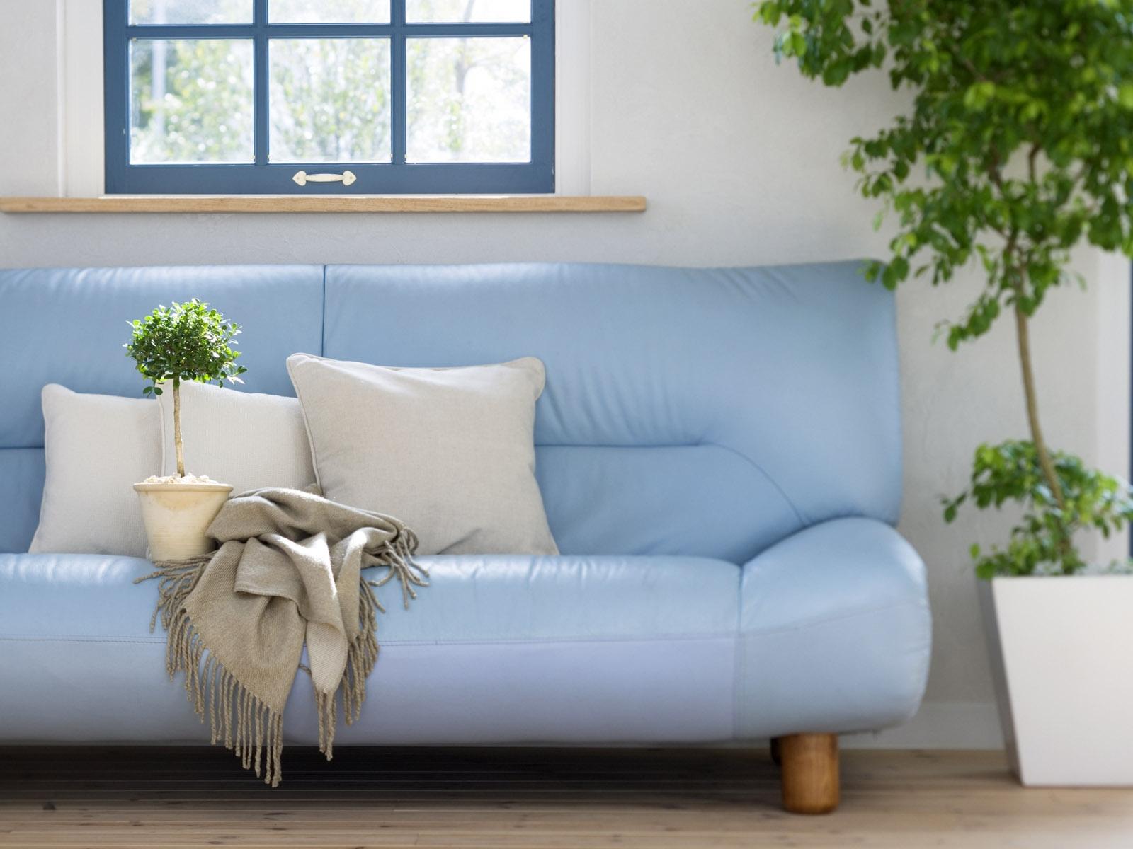Hintergrundbilder Zimmer Couch Innenarchitektur Blume Sofa