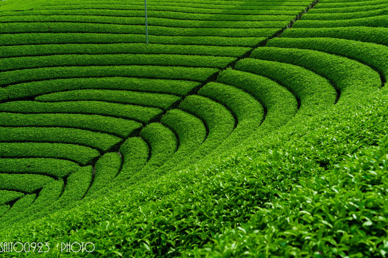 Fondos De Pantalla Japón Paisaje Césped Verde Cámara