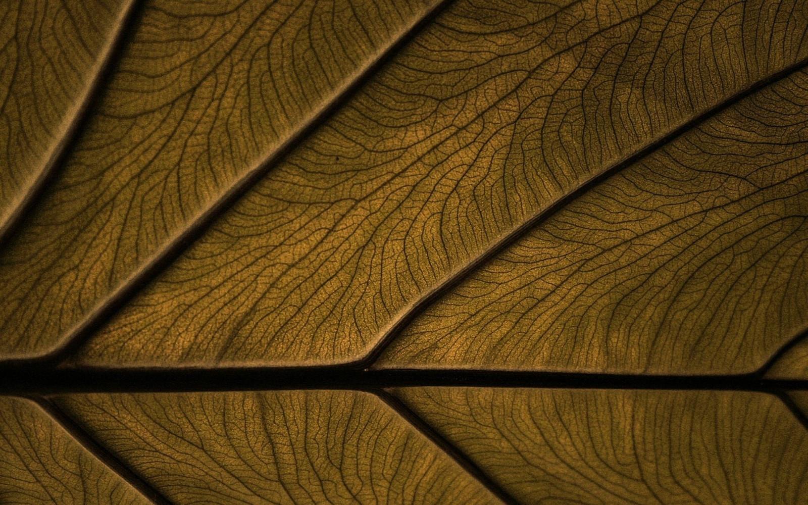 menakjubkan 30 gambar wallpaper garis coklat