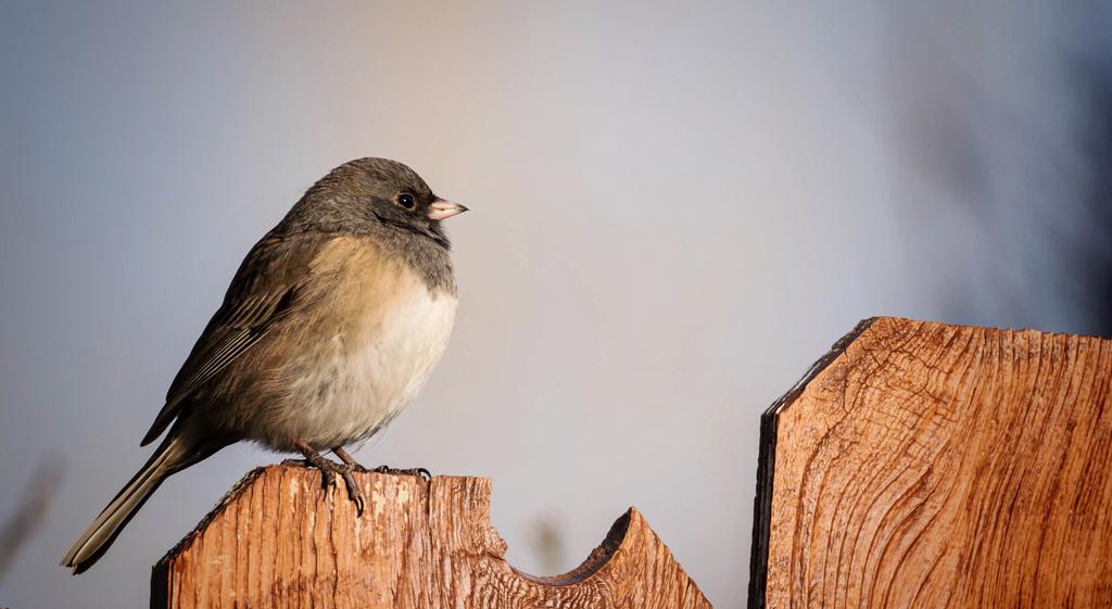 Wallpaper : fauna, beak, feather, close up, morning, wildlife