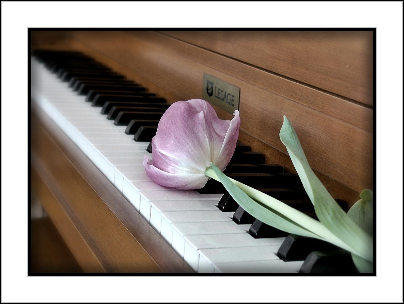 Картинки тюльпаны и пианино