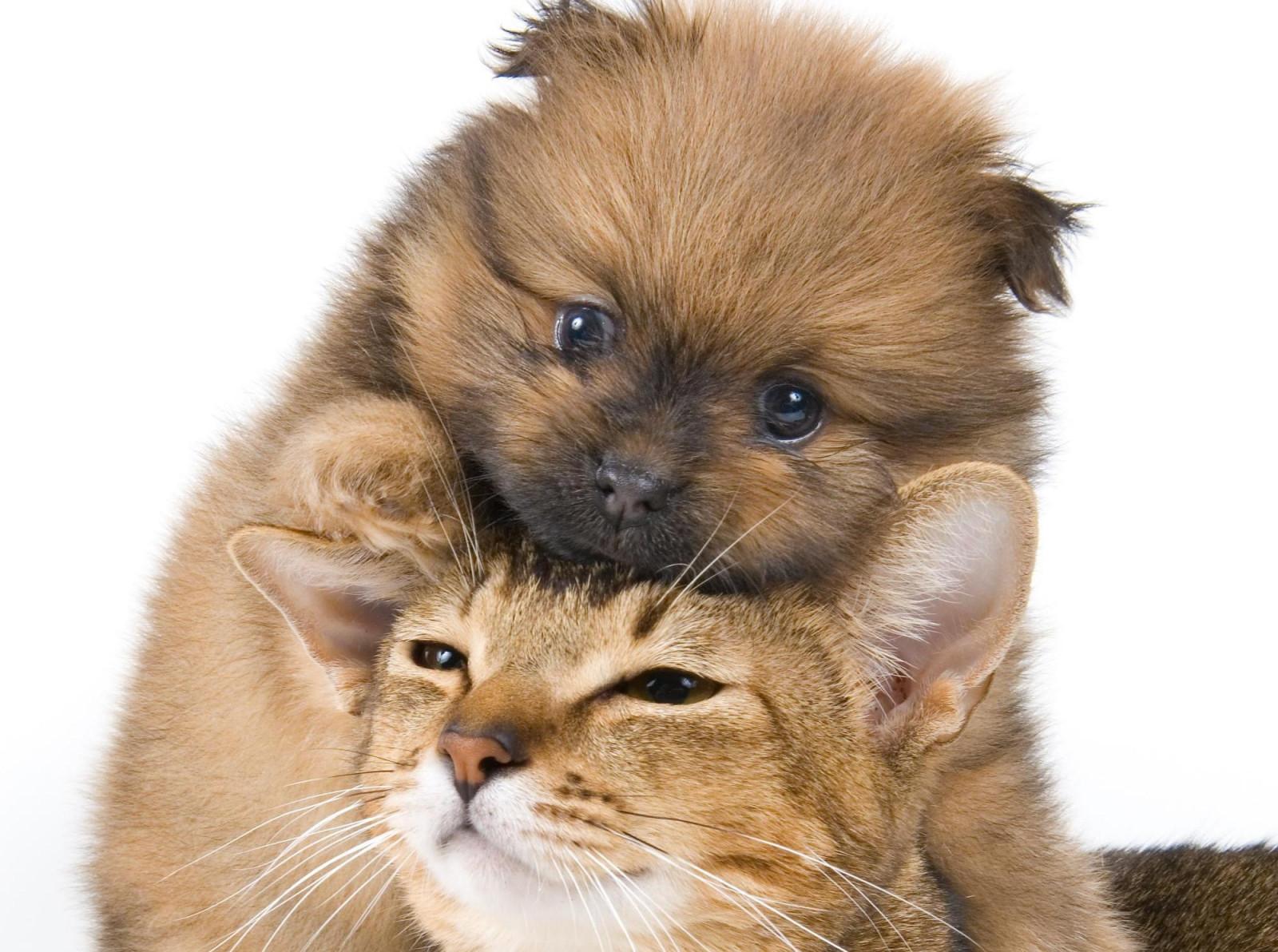 Картинки с котятами и щенками милые