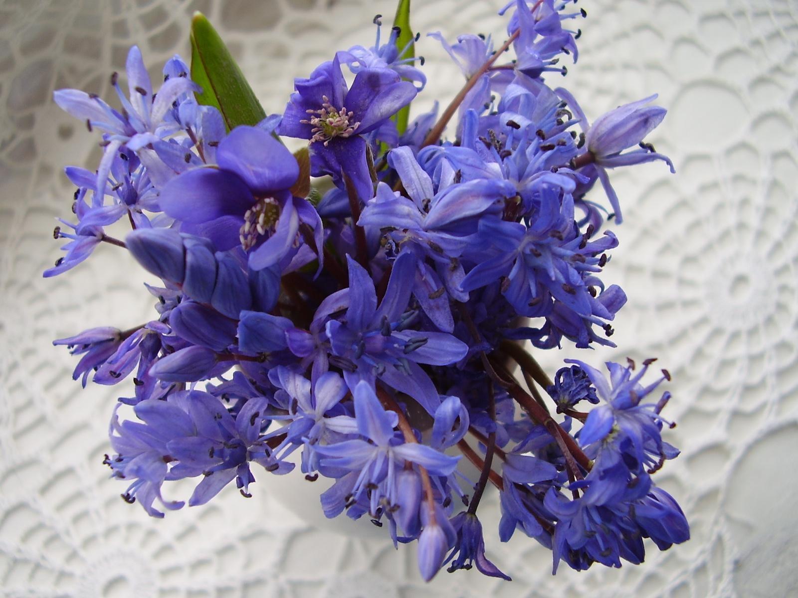 Mazzo Di Fiori Viola.Sfondi Viola Blu Erba Fiore Giacinto Flora Mazzo Petalo