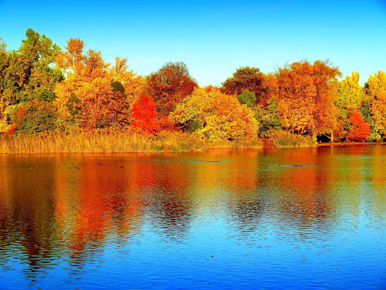 foto de Fond d'écran : réflexion, la nature, eau, feuille, Lac, l'automne ...