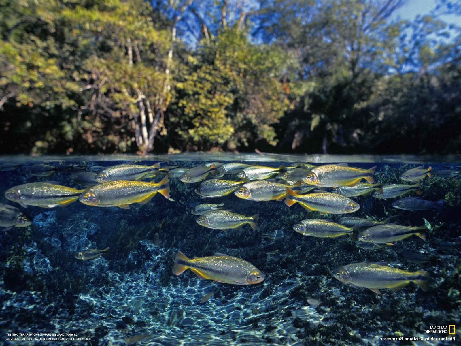 Картинка озера с рыбой
