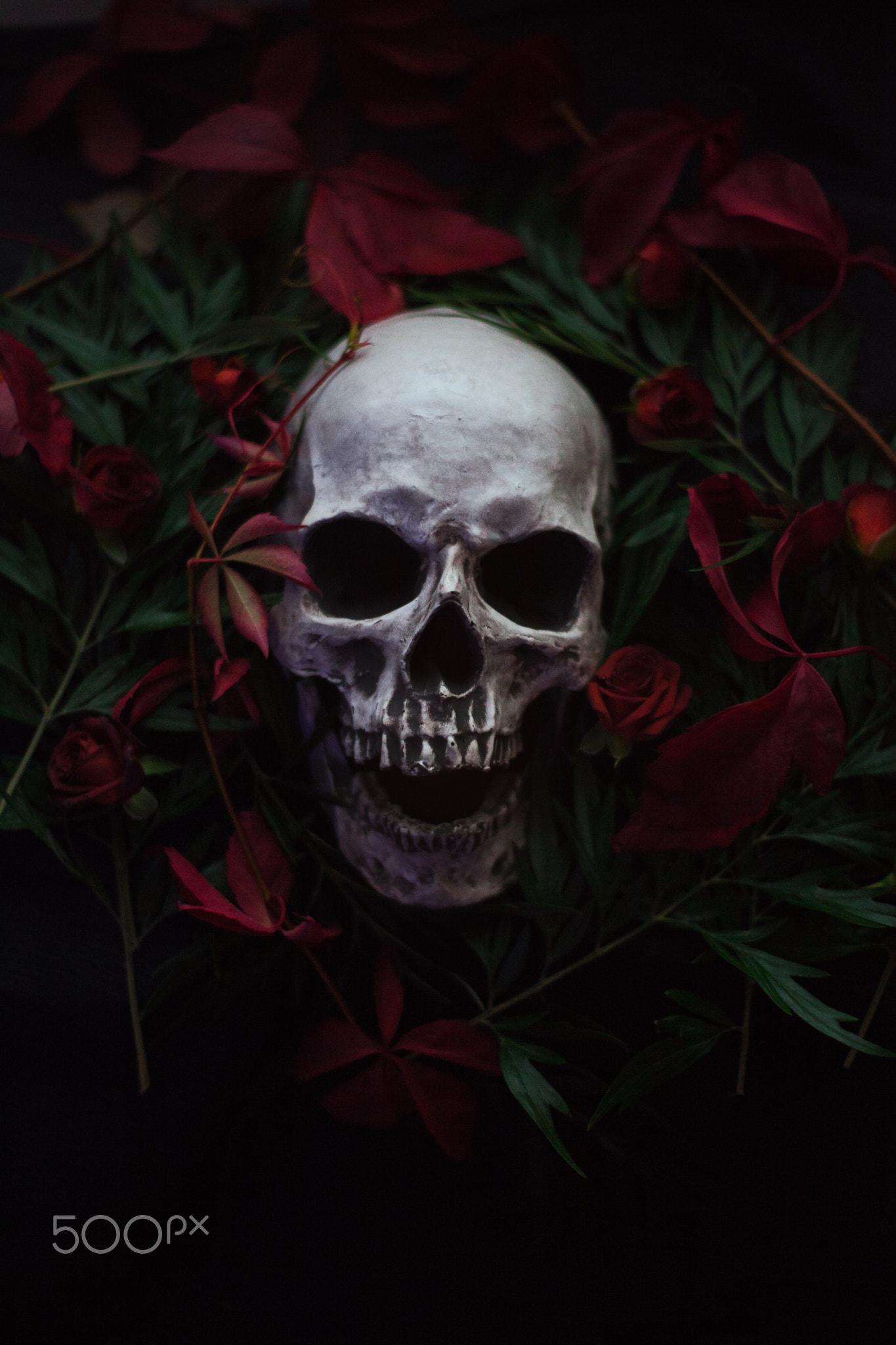 радостью фотографии череп с цветами солнечном узбекистане эту