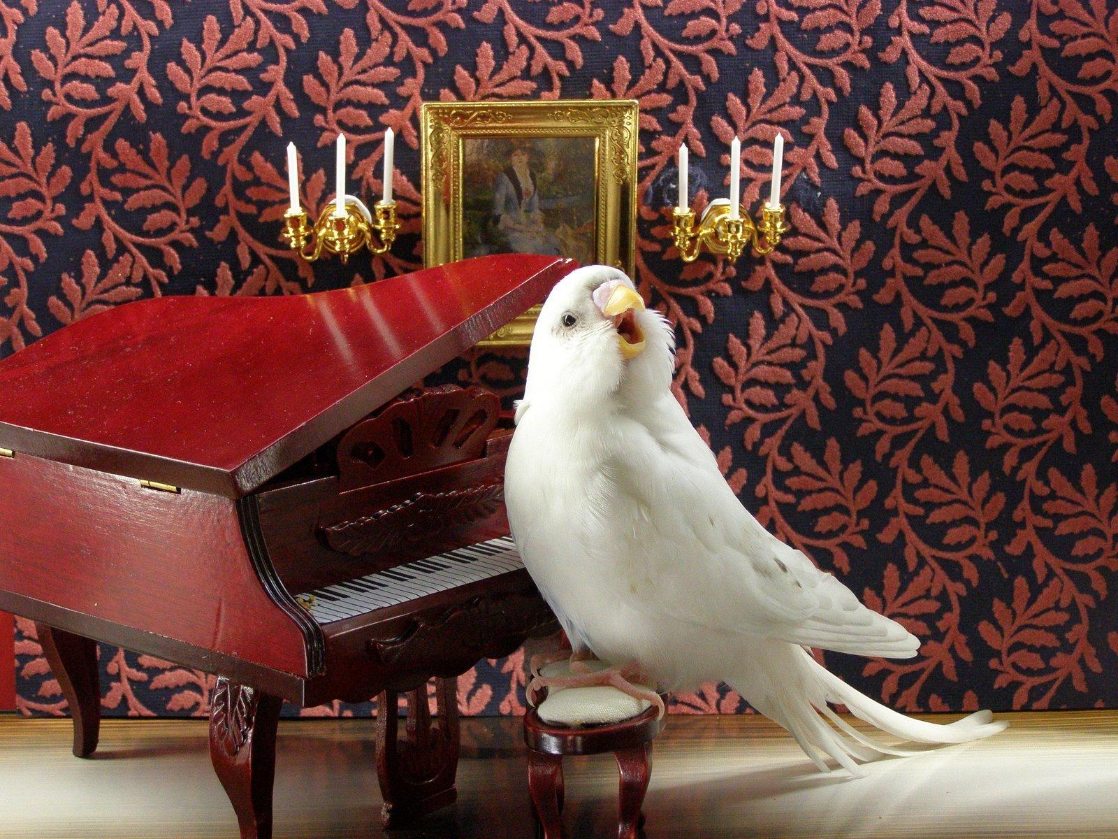 наши волнистый попугайчик прикол картинка длинные юбки можно