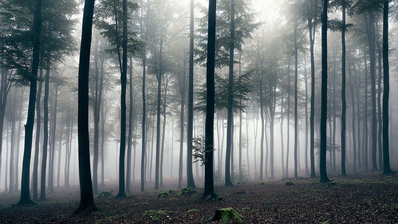 время туманный лес рисунок эконом- комфорт-класса сегодня