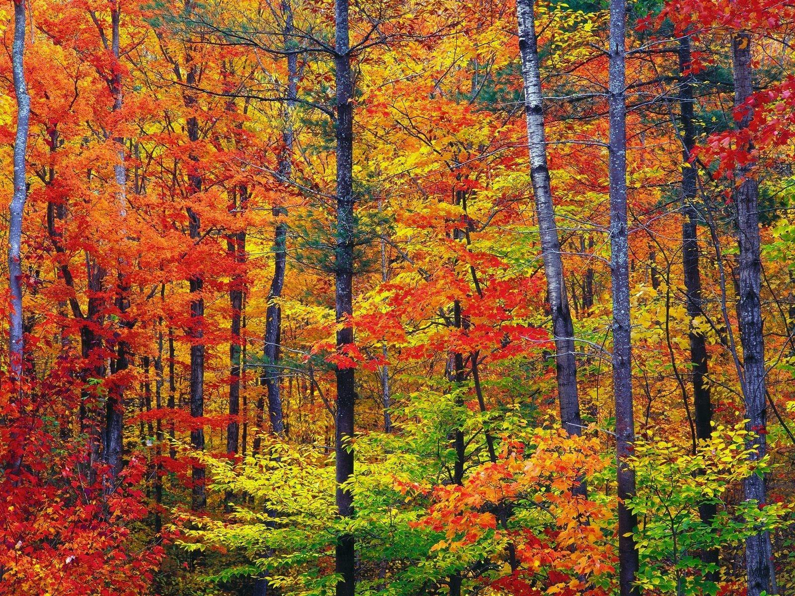Hintergrundbilder Baume Wald Blatter Holz Stamme Baum Herbst