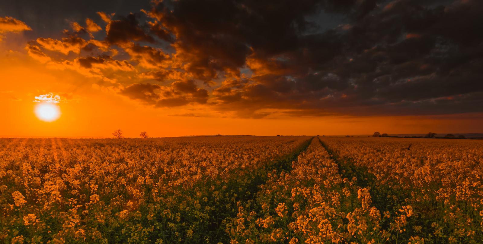 Fondos de pantalla flor warwickshire hora dorada for Hora puerta del sol