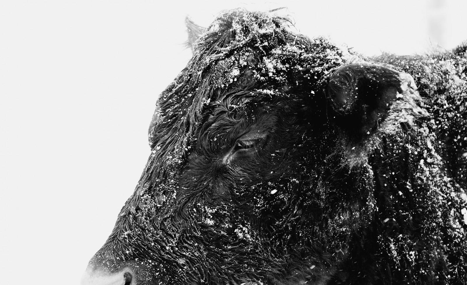 fond d 39 cran dessin monochrome la nature neige hiver la photographie orage sculpture. Black Bedroom Furniture Sets. Home Design Ideas