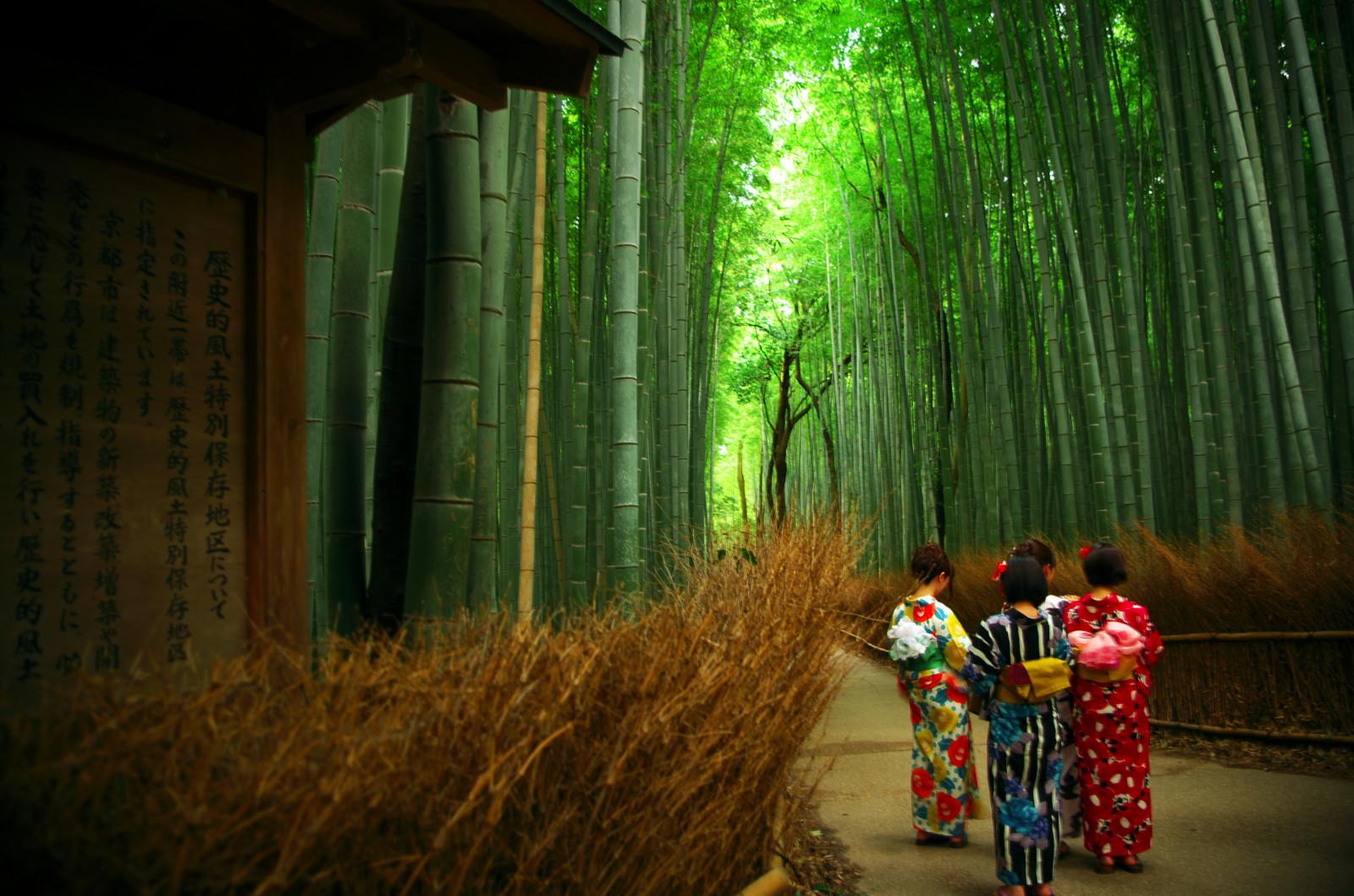 Fond d'écran : Japon, forêt, Kyoto, Pentax, bambou, Arashiyama, K50, Trotaparamos 4839x3205 ...