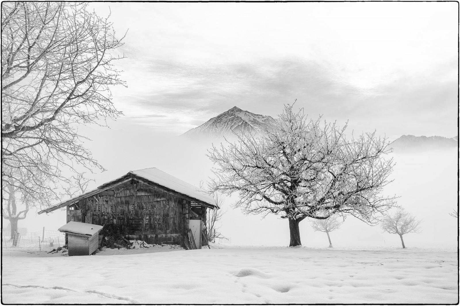 fond d 39 cran des arbres dessin montagnes monochrome neige hiver la photographie maison. Black Bedroom Furniture Sets. Home Design Ideas