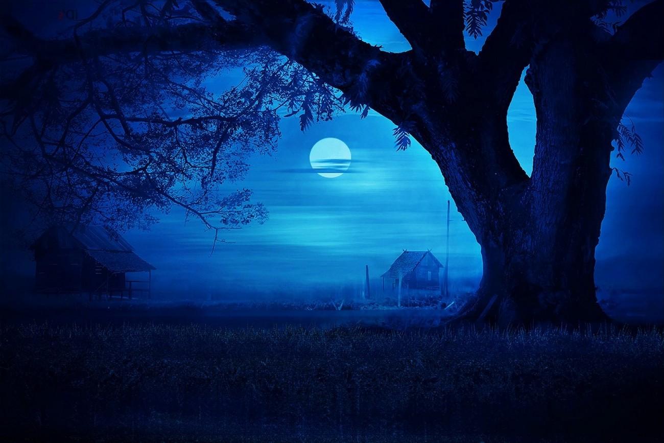 Great Wallpaper Night Grass - 1300x867_px_blue_field_grass_Hut_landscape_mist_Moon-679266  Collection-992765.jpg!d