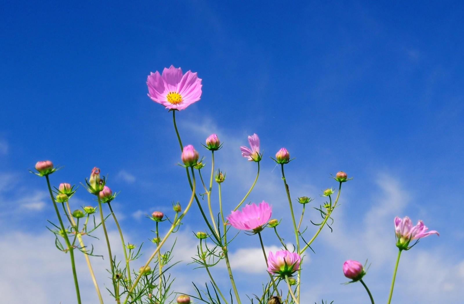 Картинки днем, картинки цветы на фоне неба