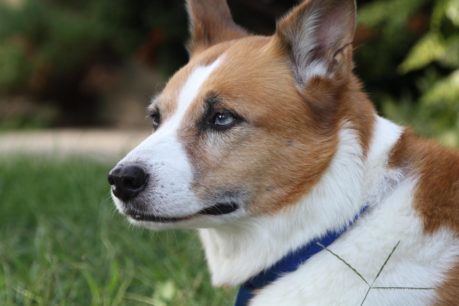 Sfondi Cane Di Razza Gruppo Razza Del Cane Cane Come Mammifero