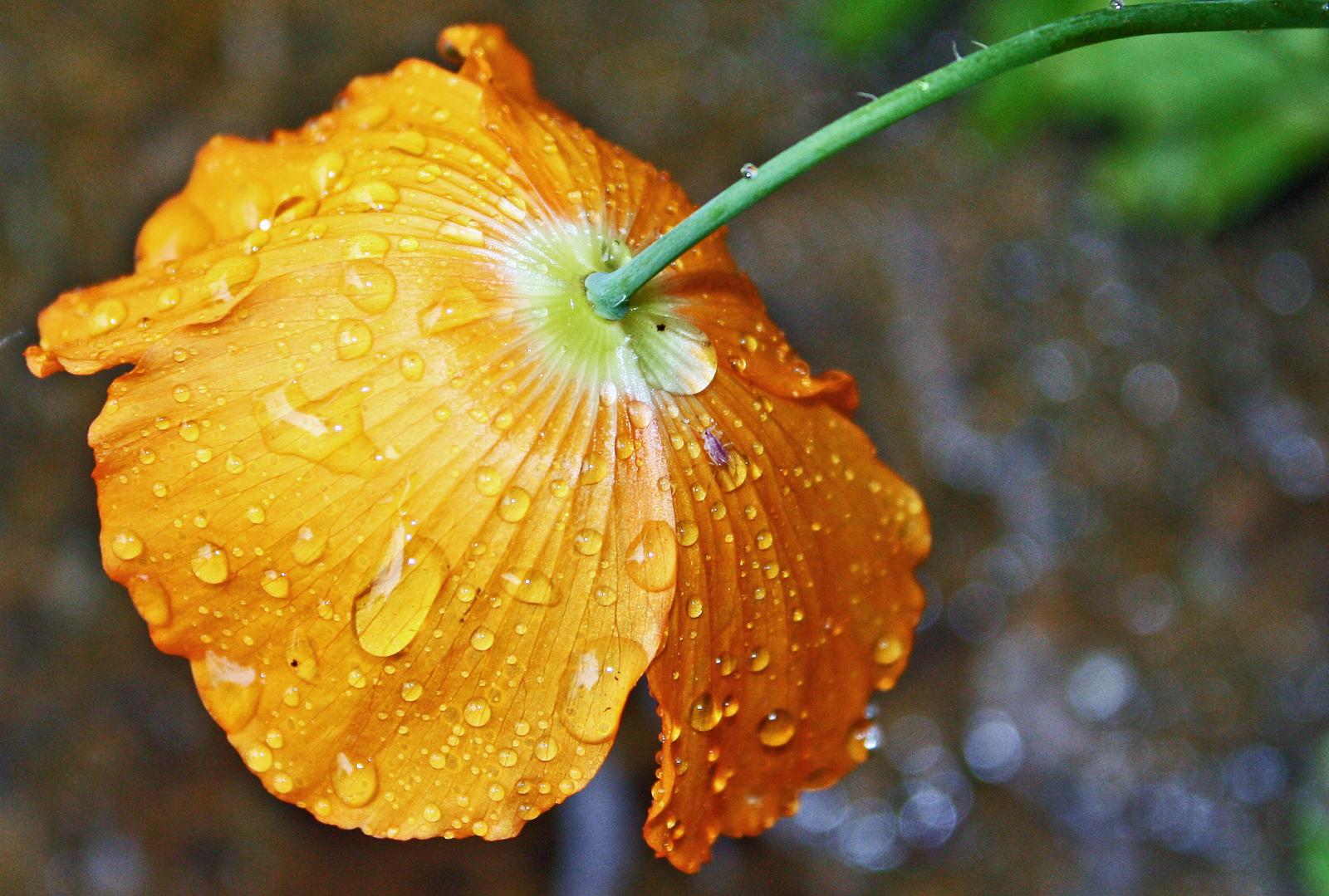 Фото капли дождя на цветы