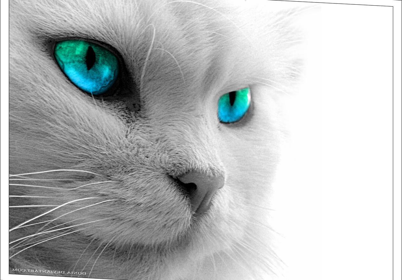 Sfondi Viso Pelliccia Naso Gattini Barba Iris Persiano