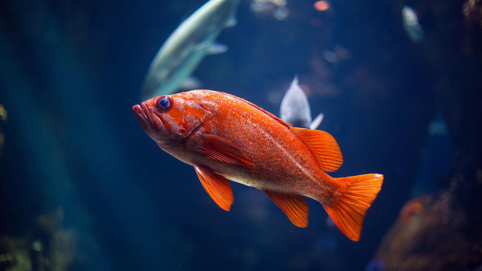 Рыбка картинки красивые