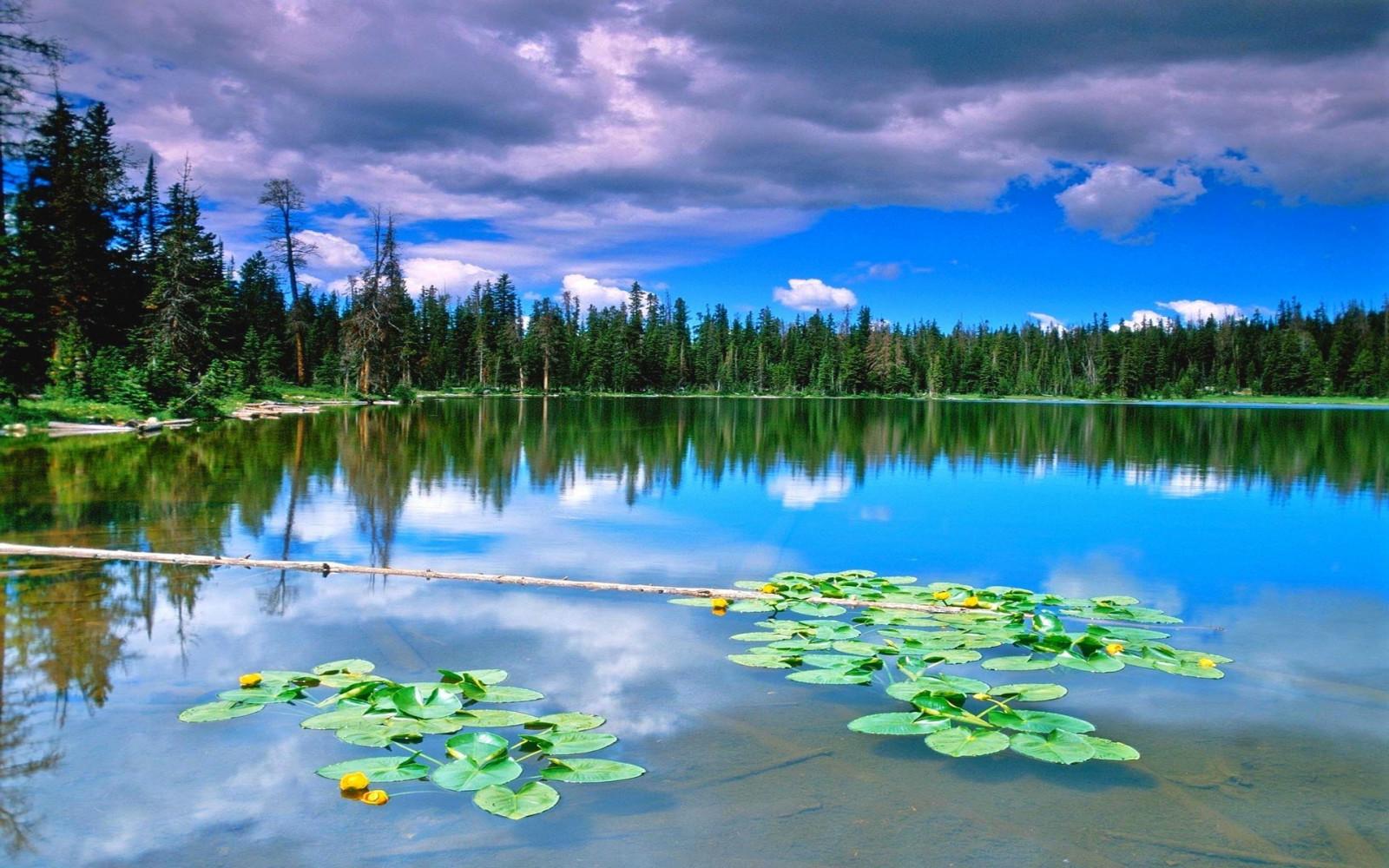Открытки природы с отображением у воде, про