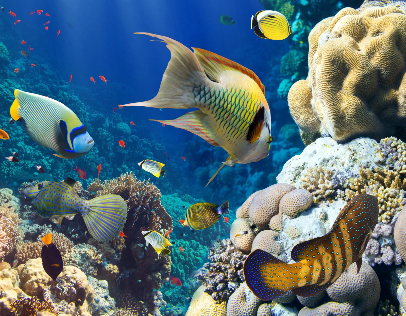 fond d 39 cran animaux mer poisson sous marin r cif de corail aquarium la biologie faune. Black Bedroom Furniture Sets. Home Design Ideas