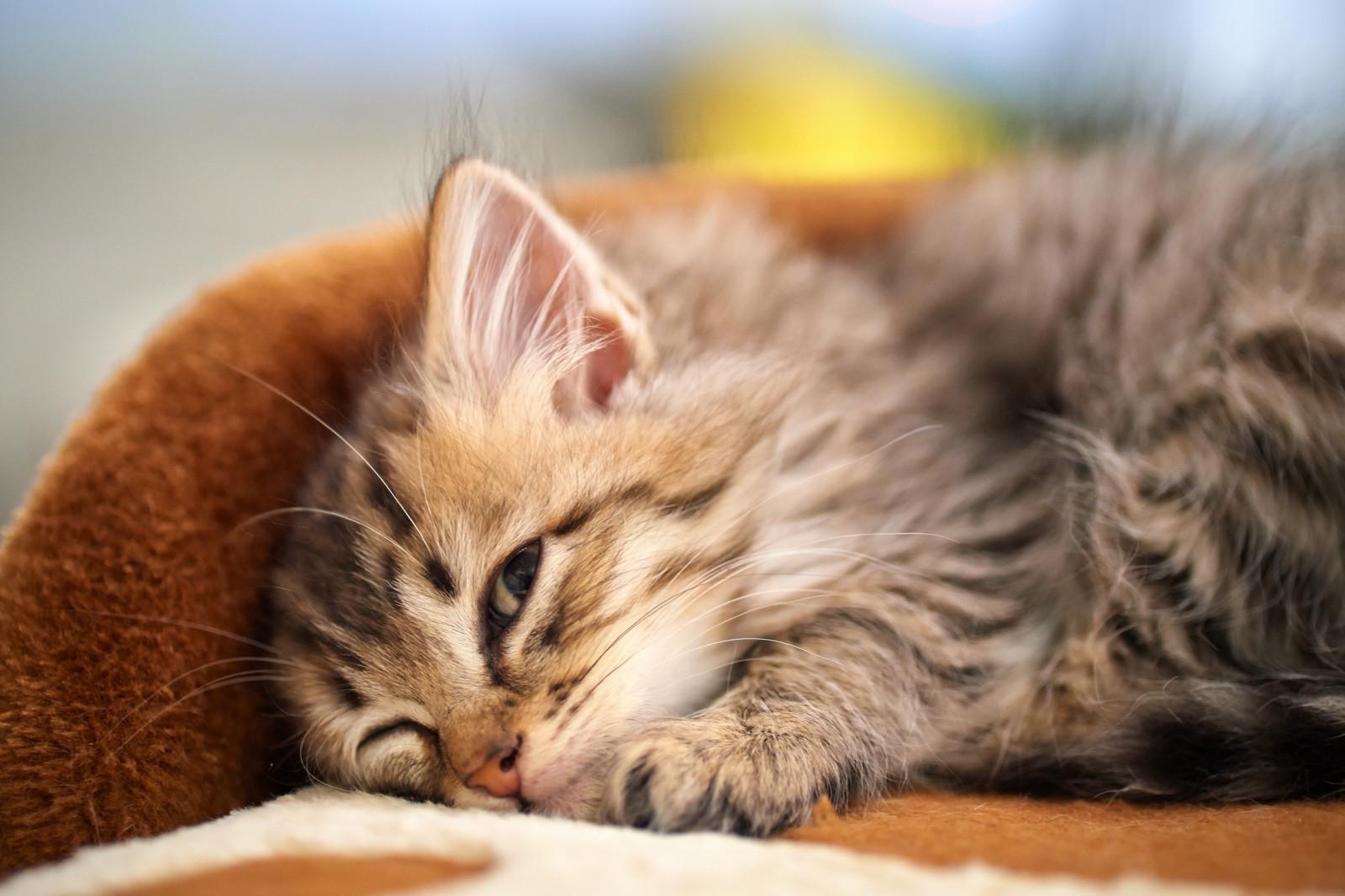 Став для наведение страха на окружающих Kitten_fluffy_down_face-594487