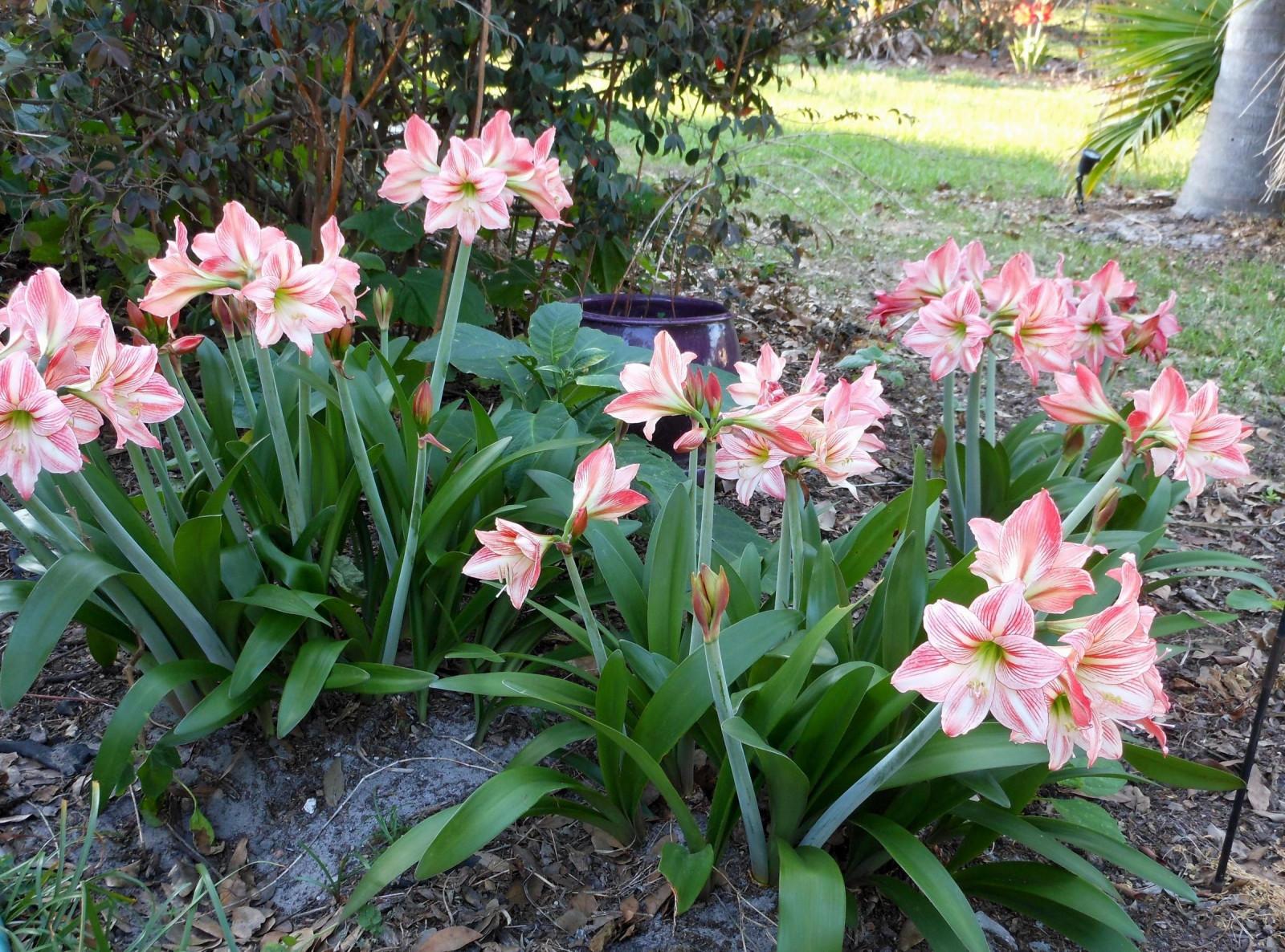 Image De Parterre De Fleurs fond d'écran : jardin, parc, vert, fleur, lis, parterre de