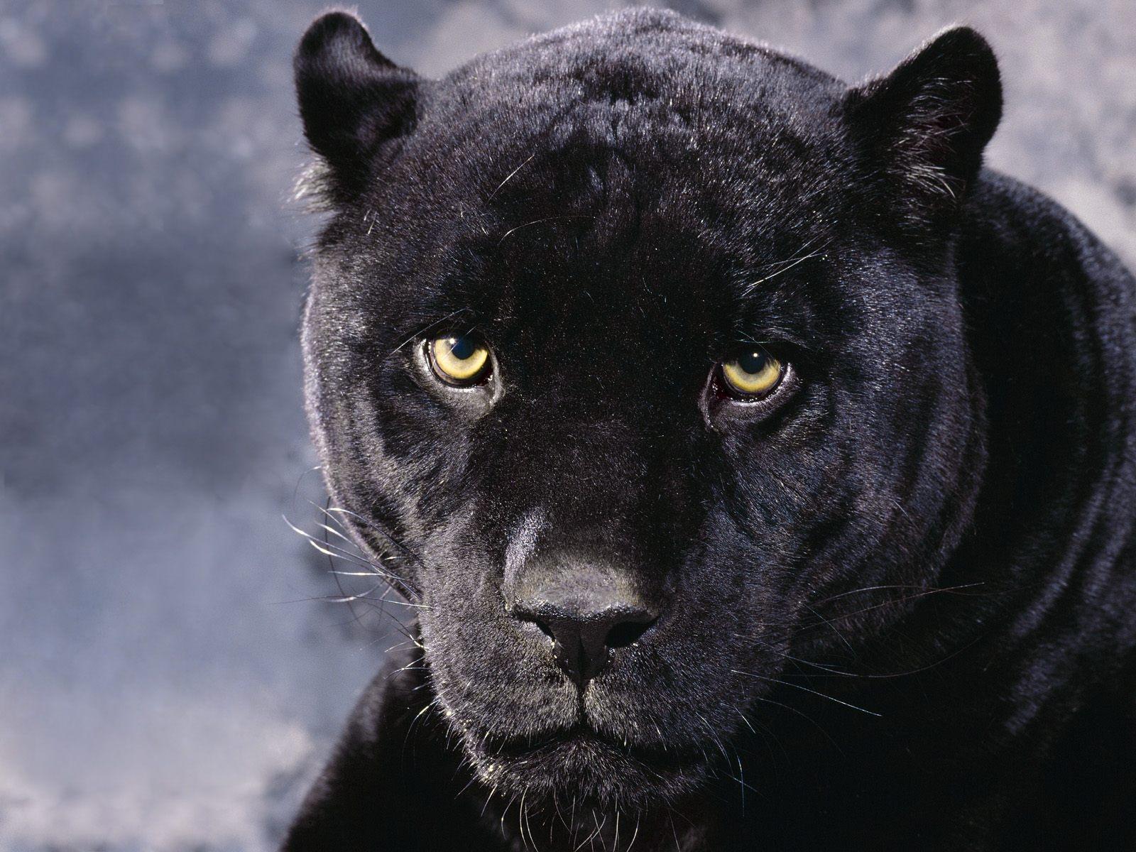 timeless design b97d3 3d1e1 Hintergrundbilder : schwarz, einfarbig, Augen, Zorn ...