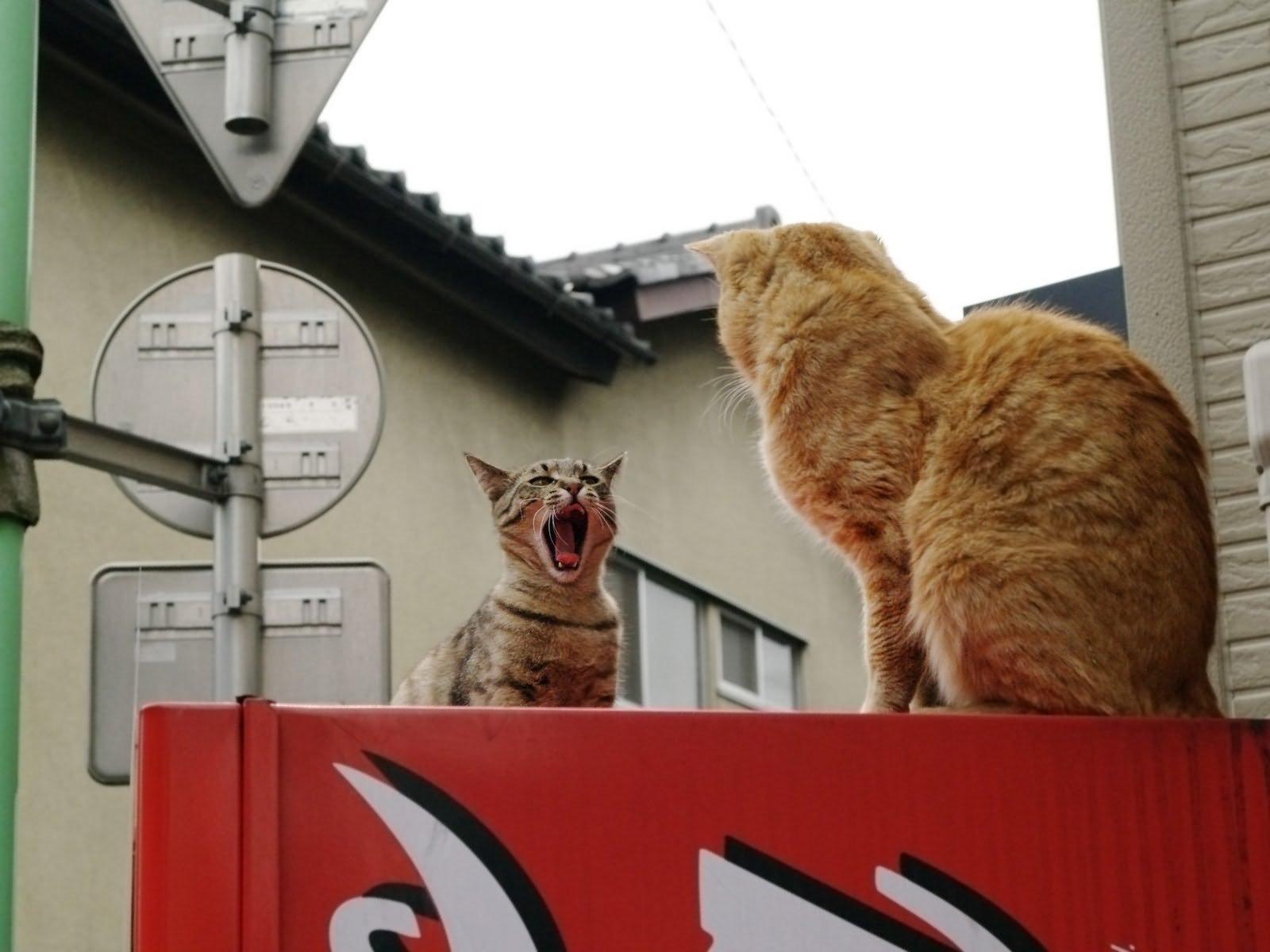 Движущиеся картинки смешные коты
