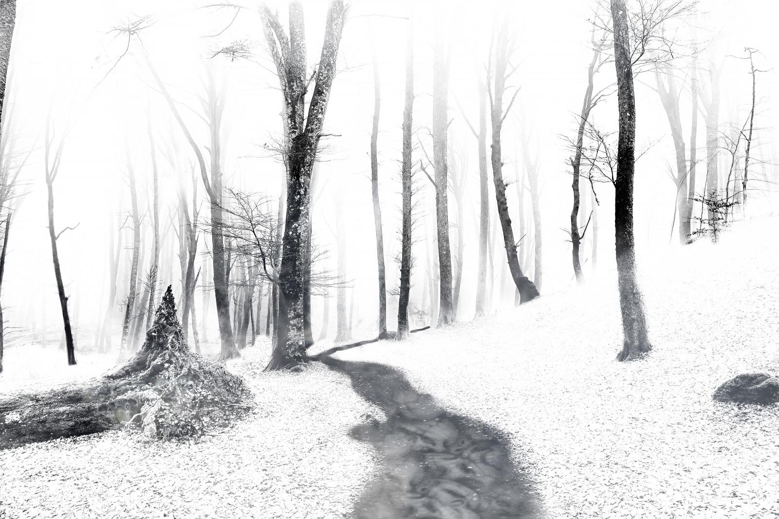 картинки черный лес карандашом эта славная