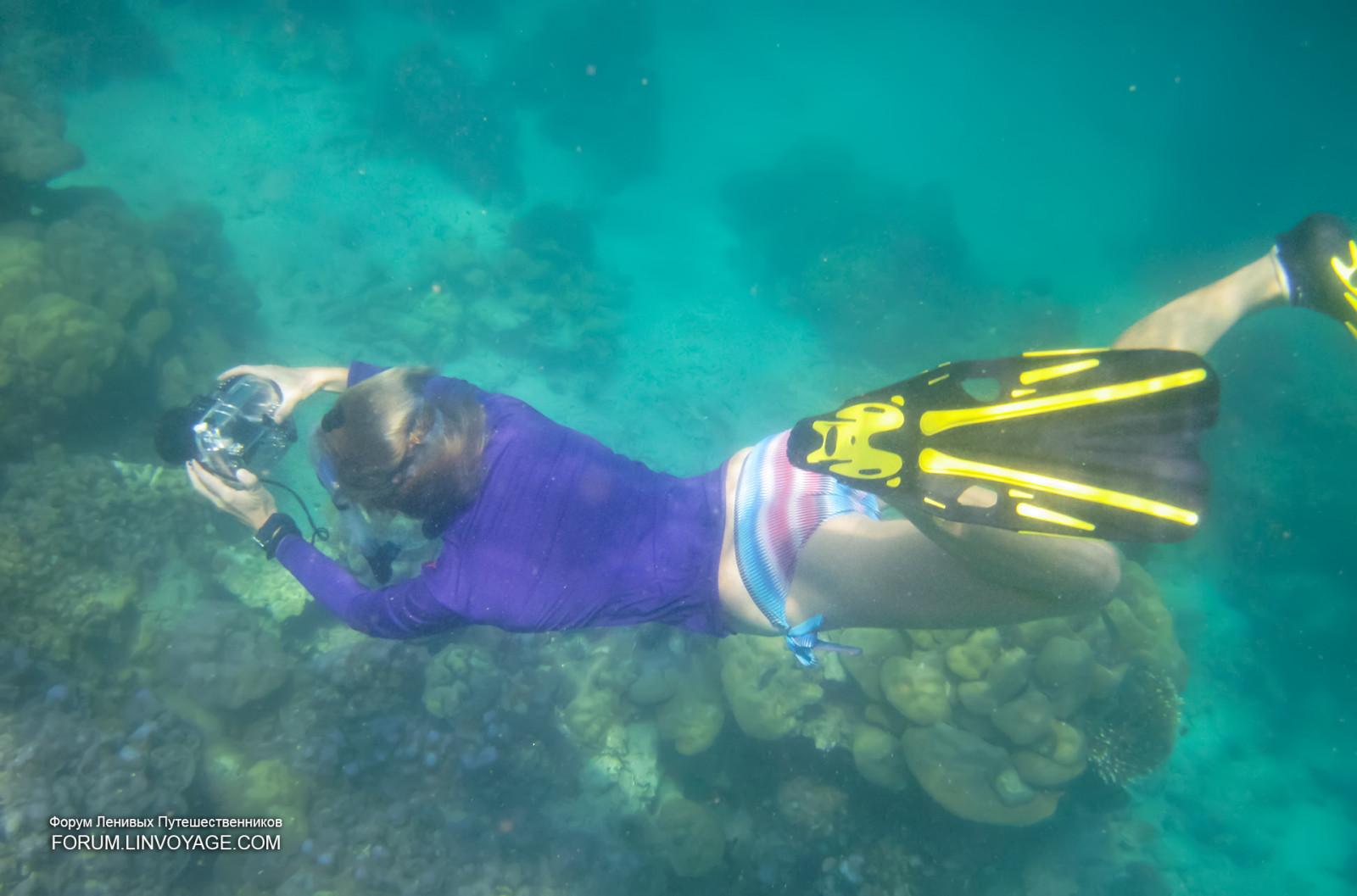 Wallpaper : sports, sea, mask, fish, coral, island, bikini, Malaysia, snorkeling, yacht ...