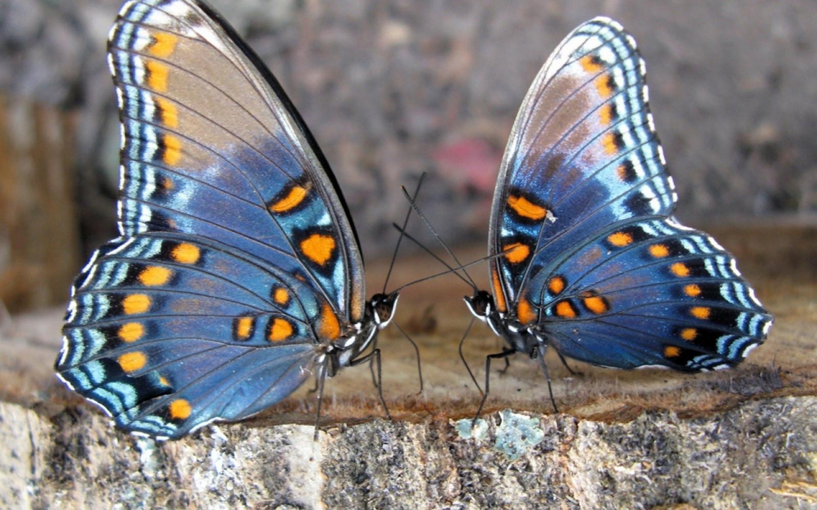 Картинки красивые насекомые