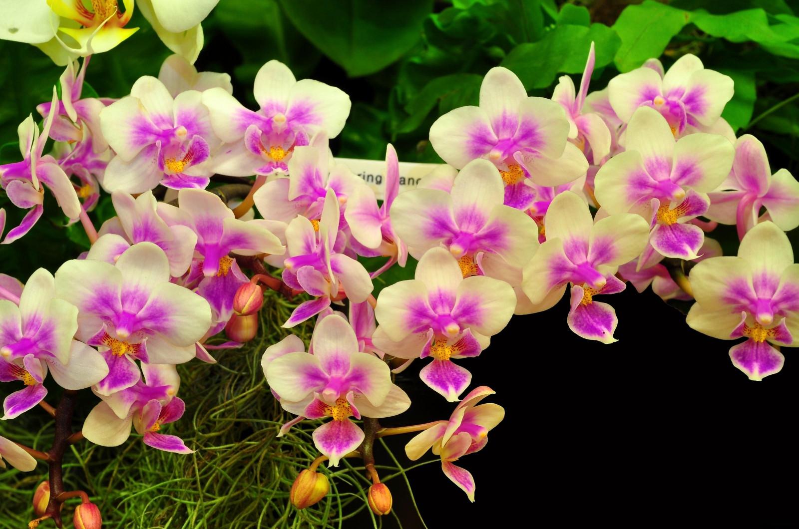 Красивая открытка орхидеи, мая