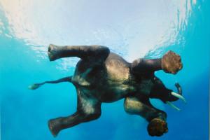 hintergrundbilder : 1620x1080 px, afrika, tiere, blau, natur, meer, schildkröte 1620x1080