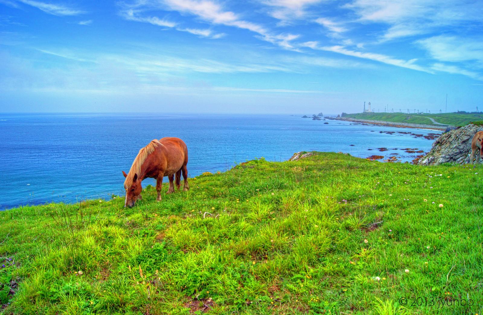 600 Koleksi Gambar Pemandangan Alam Hewan Dan Tumbuhan Terbaik