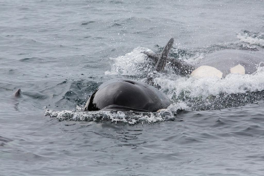 Fond D Ecran Ocean Voyage Mer Etats Unis Animal