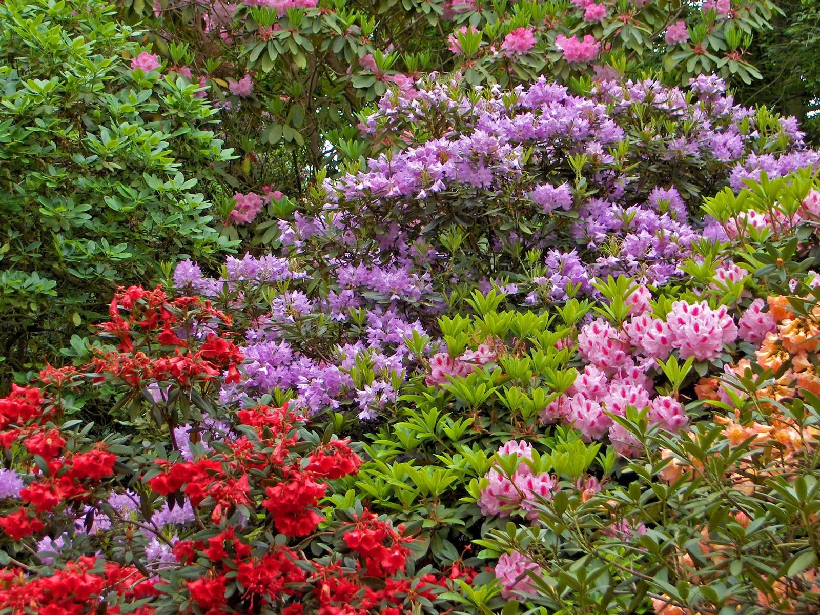 Fondos de pantalla flores jard n parque verde - Arbustos perennes con flor ...