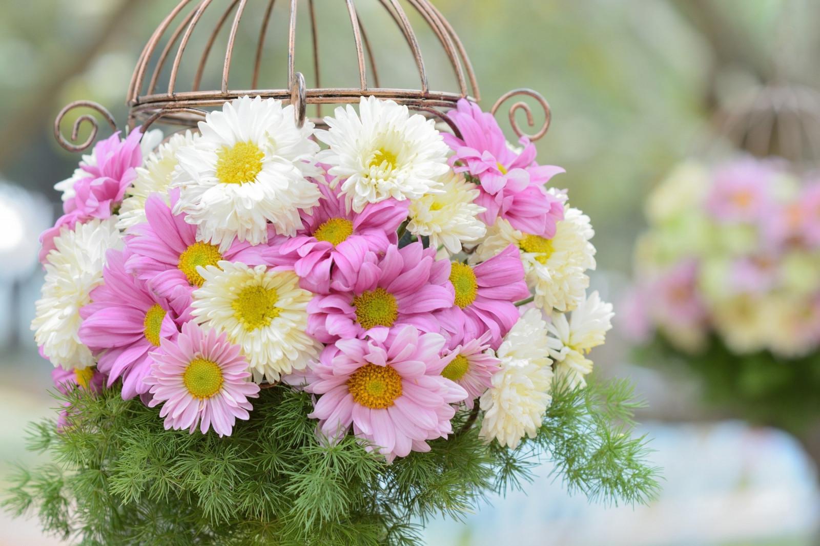 Открытка с цветами маргаритками с днем рождения, красивые открытки