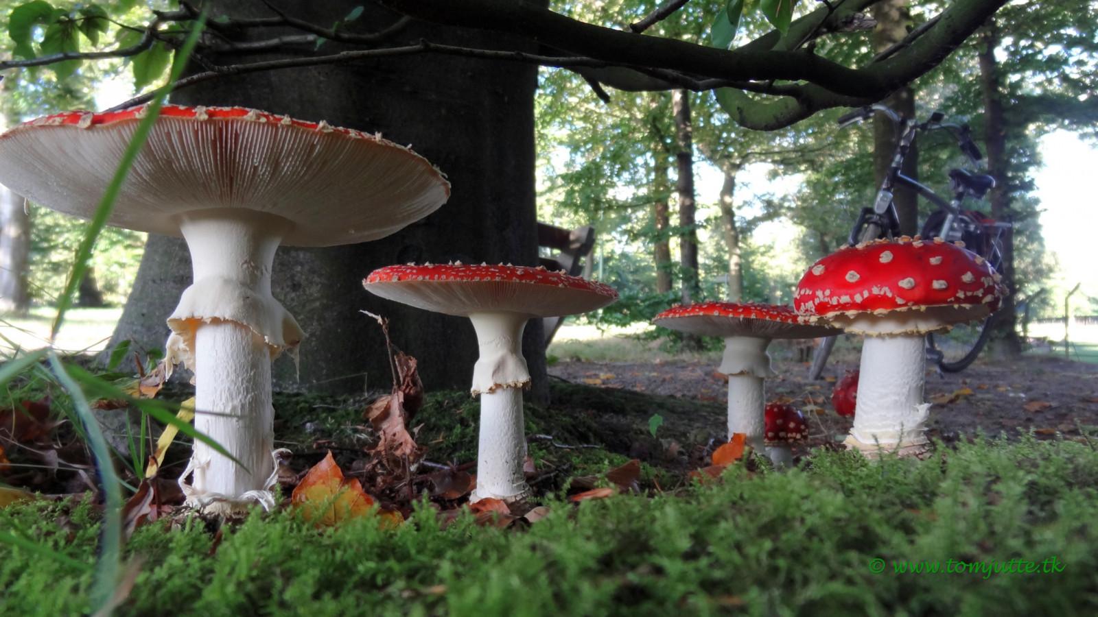 Hintergrundbilder fallen garten kinder pilz sony niederlande europa niederl nder - Garten baum fallen ...